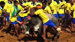 Understanding The Whats And Whys Of Jallikattu—Part