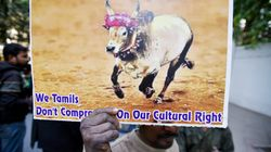 Centre To Withdraw Jallikattu Notification From Supreme