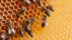 Cop Stung To Death By Swarm Of Bees In Madhya