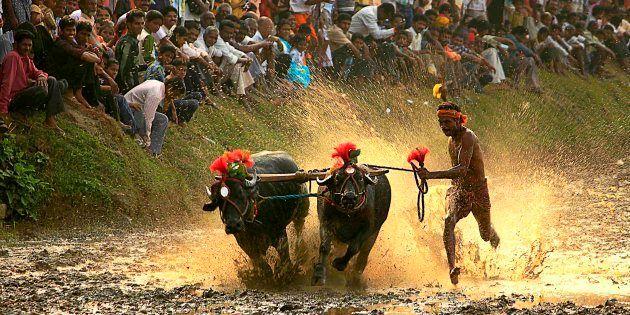 Protest Meet Held In Mangaluru Against Ban On Coastal Karnataka's Traditional Buffalo