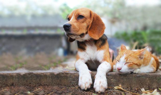 [QnA] 개와 고양이를 기르는 사람 중 누구의 만족도가 더