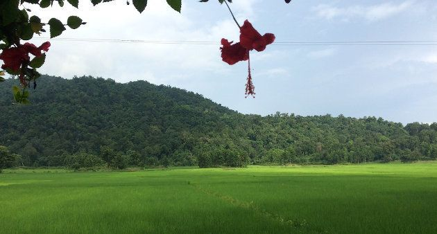 The rice fields of South Kamrup in