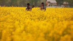 India To Produce Record Food Grains In