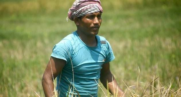 A migrant daily wage worker at a rice field in Perumbavoor village of Ernakulam district (Photo by Centre...