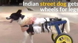 VIDEO: A Street Dog In India Gets The Chance To Walk