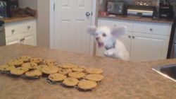 VIDEO: This Dog Jumping To The Aroma Of Cookies Is All Kinds Of