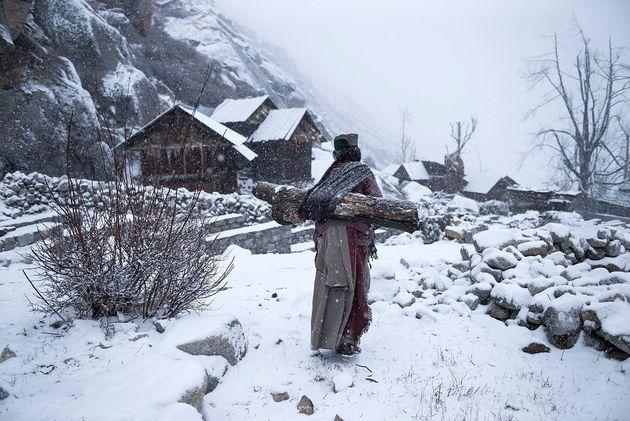 Kinnaura tribal old women in remote village in Himachal Pradesh carrying big log back home to warm up...