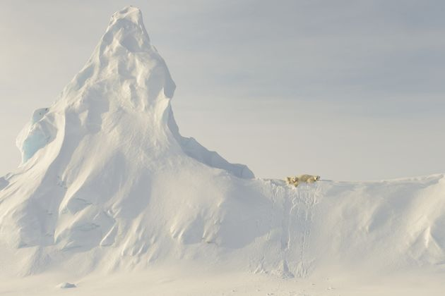 This photo was taken far out on the sea ice in the Davis Straight off the coast of Baffin Island. This...