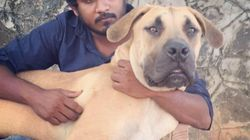 Shravan Krishnan, The Chennai Dog Rescuer, Was Always A