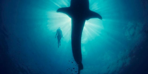 6,000 Dives And Counting: The Beautiful World Of An Underwater