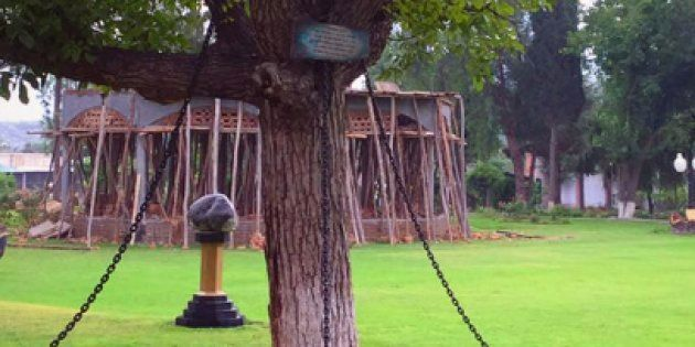 Here's Why This Banyan Tree In Pakistan Has Been Under Arrest For A