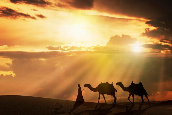 Arab man with camels at sunset