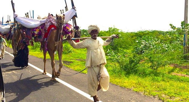 Rabaris on the move with their camels and belongings on the edge of a highway in