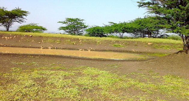 Contoured trenches help prevent water run-off in Kumbharwalan village.
