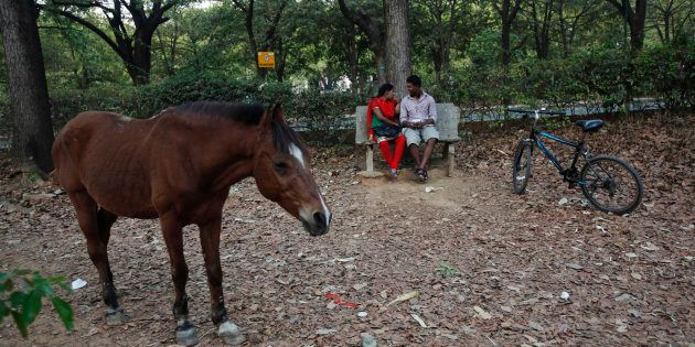 A couple sits on a bench as a horse stands near them in Cubbon Park, a large green space in central Bangalore,...