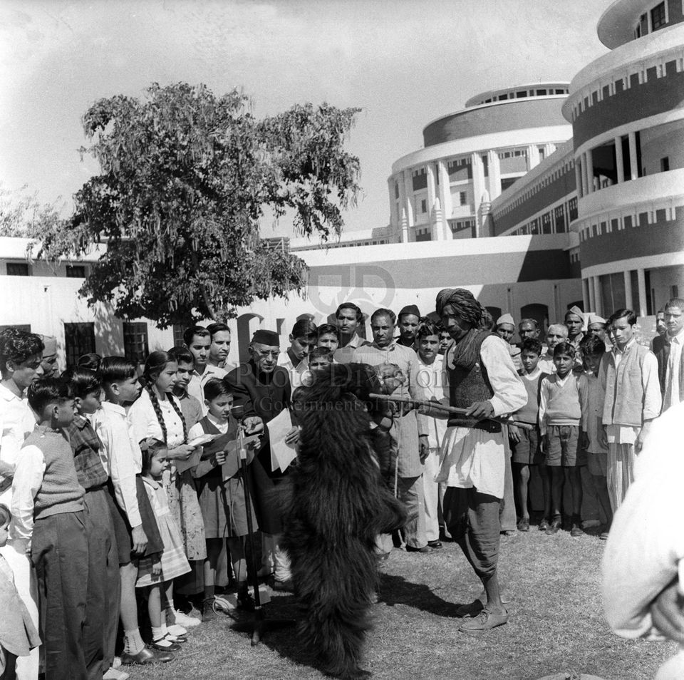 The All India Radio New Delhi recorded a program at the A.I.R. lawns. Picture shows the bear performing...