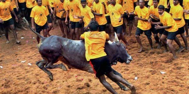 Competitors try to tame a bull
