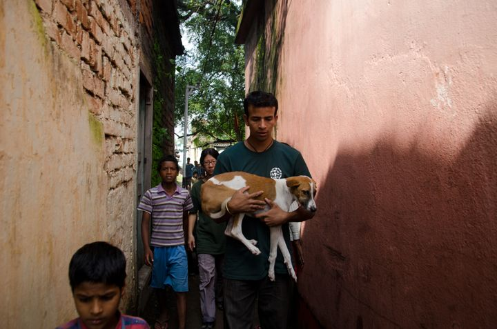 Street Dog Program, Jamshedpur, India Humane Society International, HSI