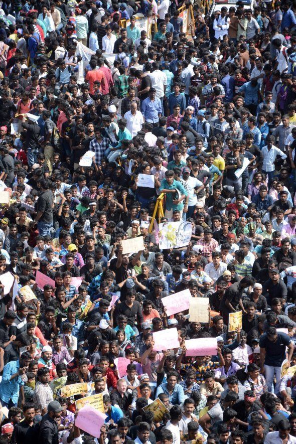 Indian protesters gather during a demonstration against the ban on the Jallikattu bull taming ritual...