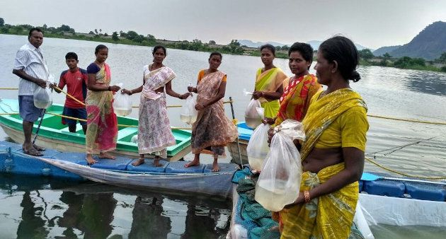 Rearing fish spawn in cages in Andhra Pradesh