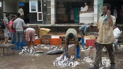 Photoblog: Chasing Fish On The Streets Of