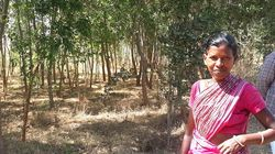 This Jharkhand Village Turned A Wasteland Into A Thriving Forest Without Government Or NGO
