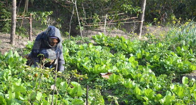 A woman in Sikkim working in her organic vegetable