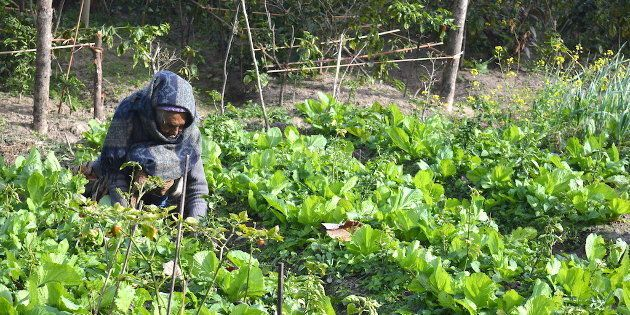 Sikkim Could Reap Far Greater Benefits From Organic