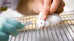 Spare Animals From Pesticide Testing: Scrap The