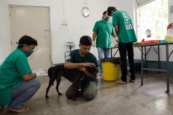 Street Dog Program, Jamshedpur, India Humane Society International, HSI