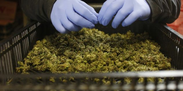 How Patients' Families Pushed Doctors To Study A Marijuana Extract For Treatment Of