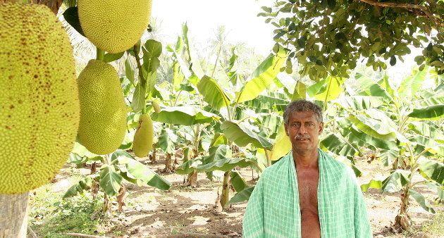 Farmer Jesuraj of Pudukottai in his farm where he practises