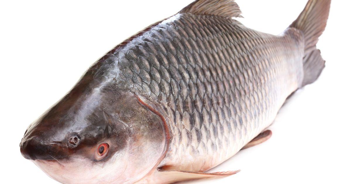 how to fish big fish