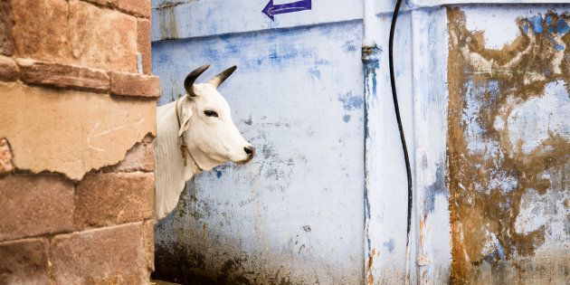 In A Letter Addressed To Humans, A Cow Tells A Few Sane, Home