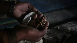 'Himalayan Viagra' Is Threatened By Fervent Chinese Demand And Climate