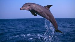 Baby Dolphin Dies In Argentina After Beachgoers Pull It Out To Take