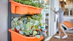 Now, Set Up A Vegetable Patch Inside Your House With This Startup