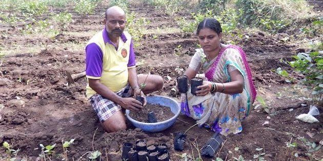 Sangita Mhatre and her husband Shashikant in their jasmine nursery, preparing saplings to be sold to...