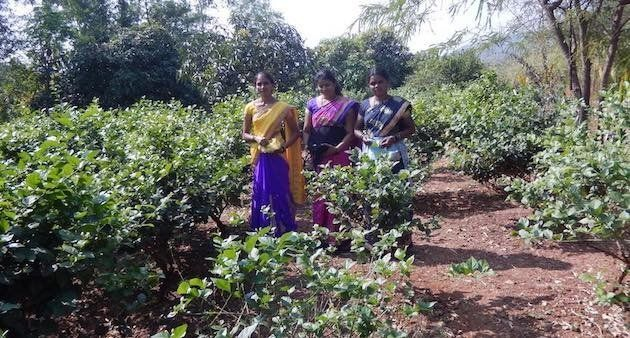 Sangita Mharte guides other women on farming methods for generating a sustained income. (Photo by