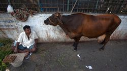 Modi Government's New Cattle Trade Rule Infringes Upon Constitutional Rights Of