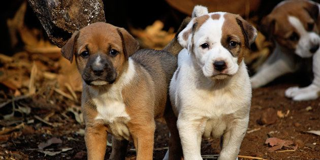 5 Things You Must Think Hard About Before Bringing A Dog