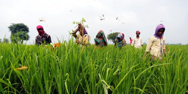 ISRO And Agriculture Ministry Team Up To Geo-Tag Agricultural