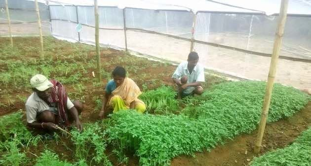Farmers tending to a vegetable nursery in Gumla district of Jharkhand. (Photo by Ashok