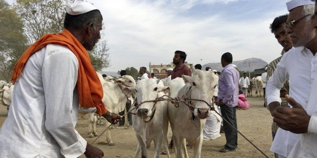SC Notice To Centre On Order Banning Trade Of Cattle For