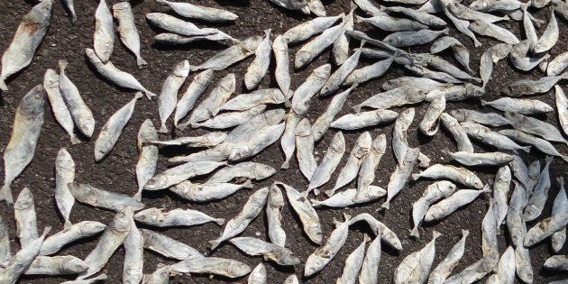 Some Of The Fish You Eat In India Can Make You Very
