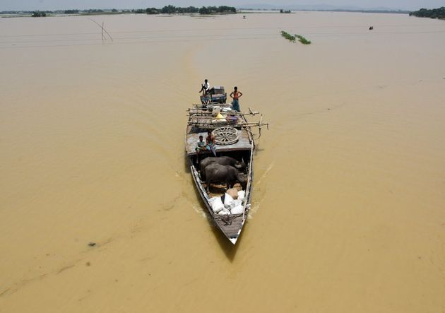 People transport their buffalos in a boat to a safer place in a flooded wetland at Balimukh village in...