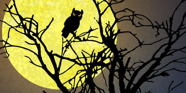 halloween background with a owl sitting in a dead tree in front of an yellow full