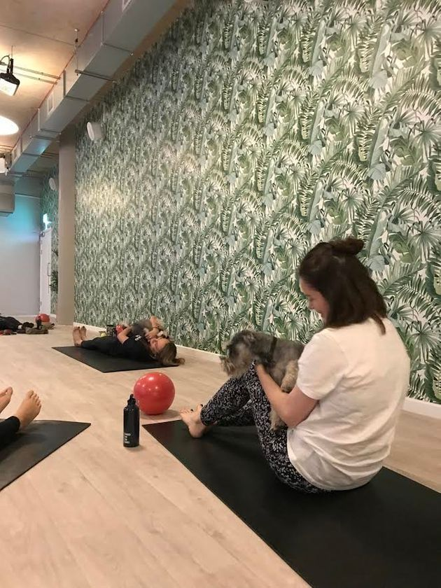 I Went To Puppy Pilates And It Was Everything I Hoped It Would