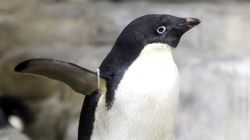 Πώς μια υπερ-αποικία 1,5 εκατ. πιγκουΐνων έμεινε κρυμμένη για 2.800