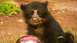 Real Life 'Paddington Bear' Rescued In